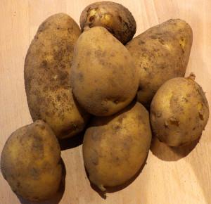 Kartoffeln1