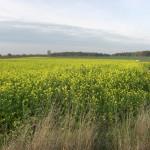 landwirtschaft3