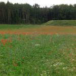 landwirtschaft4